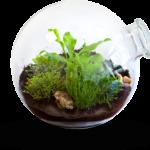 greenpharma-home